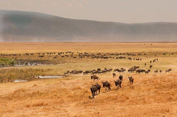 Tanzania Ngorongoro Crater van Andrea Gulickx