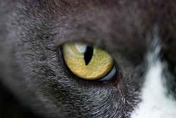Kattenoog van Remke Spijkers