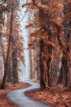 Der Flüsterweg von Lars van de Goor