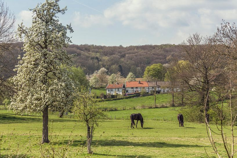 Zuid-Limburgs tafereeltje van John Kreukniet