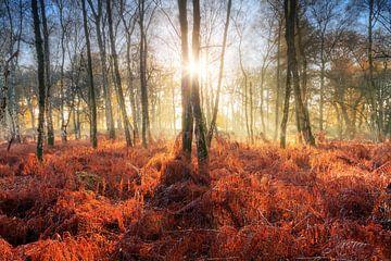 Krachtige zonsopkomst in het bos in de herfst van