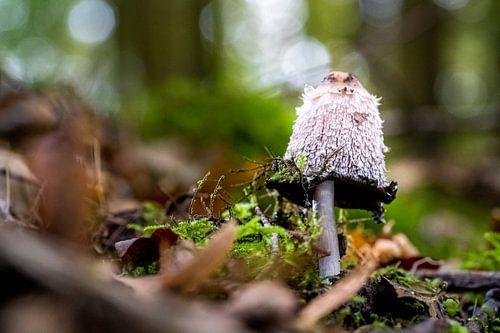 Inktzwam met onscherpe bokeh achtergrond op bosgrond