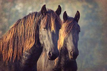 Zwei von einer Art...... Friesenpferde..... von Els Fonteine