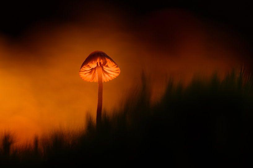 Autumn feelings van Richard Guijt