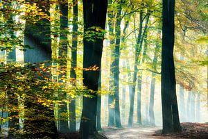 Zonnestralen in een prachtig bos.