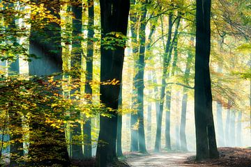 Zonnestralen in een prachtig bos. van