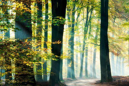 Sonnenstrahlen in einem schönen Wald. von Francis Dost