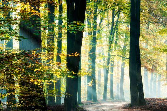 Zonnestralen in een prachtig bos. van Francis Dost