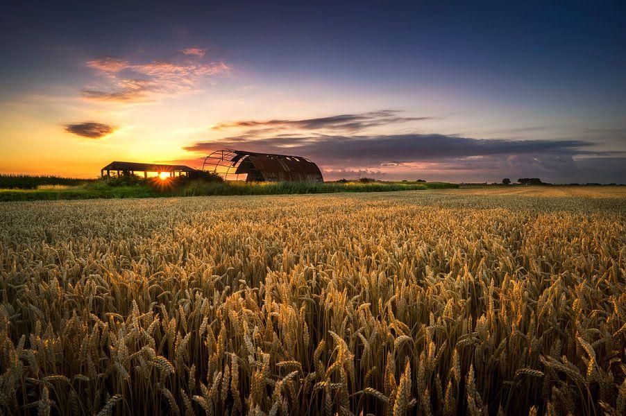 Field of Dreams van Vincent Fennis