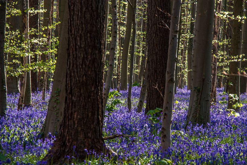 the blue flower carpet van Koen Ceusters