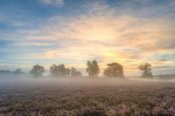 Mistige zonsopgang in de Westruper Heide van Michael Valjak