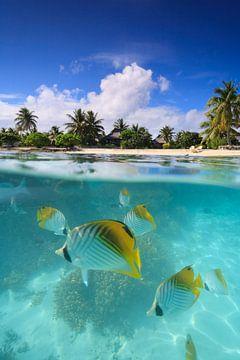 LPH 71312222 gekleurde vissen in tropisch water, Bora Bora van BeeldigBeeld Food & Lifestyle