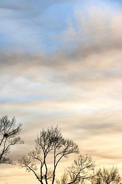 Kale bomen tijdens zonsondergang van Maarten Borsje