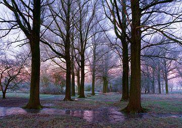 Landschaft, Frost in den Bäumen. von Marcel Kieffer