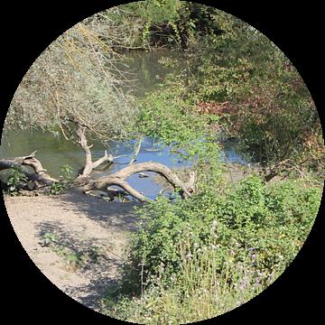 Kerkini-meer - vijver achter de dam van ADLER & Co / Caj Kessler