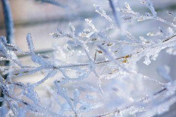 Zweig mit reifen, Winter Fotografie bedeckt von Karijn | Fine art Natuur en Reis Fotografie