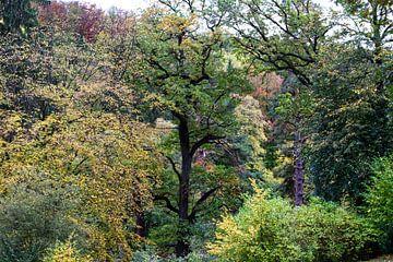 Herfst boslandschap van Marcel Boelens