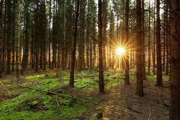 Zonlicht door de bomen - Zwaneveldsgat (Kolham- Nederland) van Marcel Kerdijk