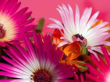 Fleur X - Blumen - Blumen von Herma Egberts