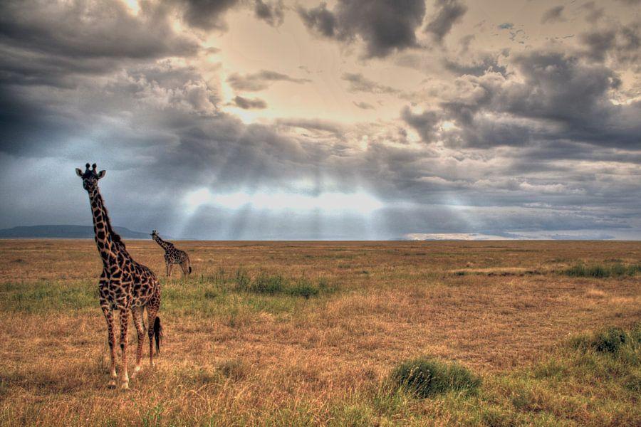Serengeti Giraffes van BL Photography