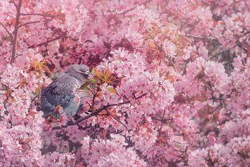 The pink blossom von Elianne van Turennout