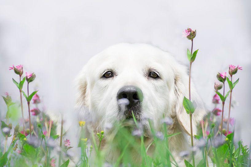 Flower boy van Desirée Couwenberg