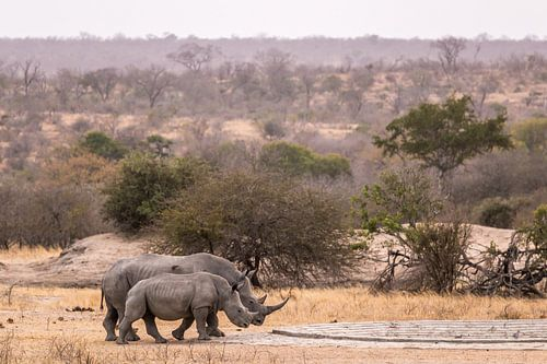 Rhino (2) von Mayra Pama-Luiten