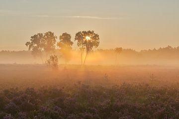 3 bomen in de mist op de Rucphense Heide von Jos Pannekoek