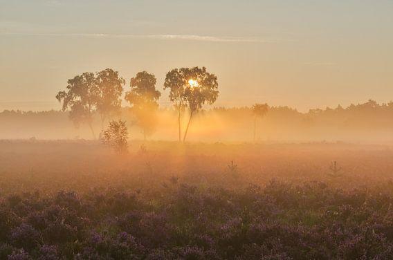 3 bomen in de mist op de Rucphense Heide van Jos Pannekoek