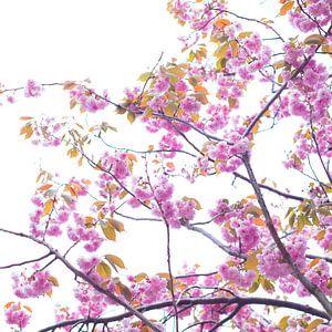 Bloesem in roze 5 van Wen van  Gampelaere