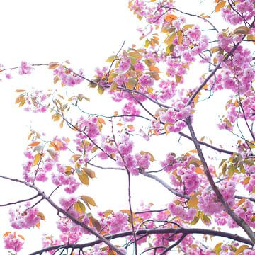 Bloesem in roze 5 von Wen van  Gampelaere