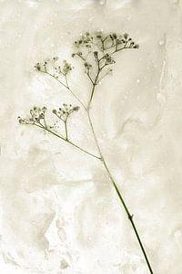 Bloemen om zeep geholpen 3