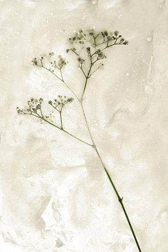 Blumen getötet 3 von Wim van Ooijen