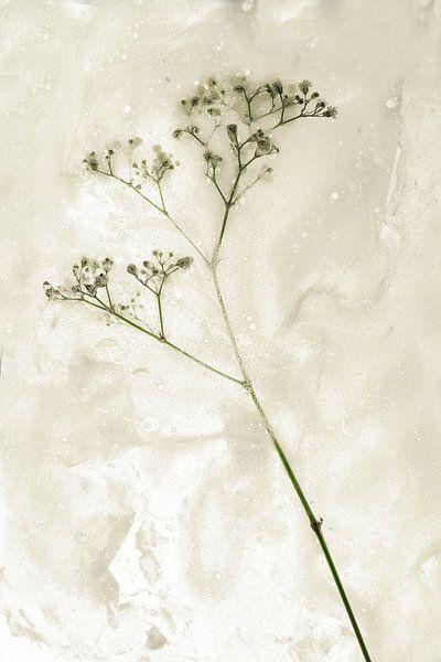 Bloemen om zeep geholpen 3 van Wim van Ooijen