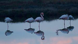 Weerspiegeling Flamingo's
