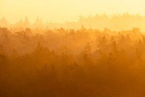 Zonsopkomst in de mist van