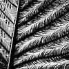 plantaardig van Peter Nijsen thumbnail