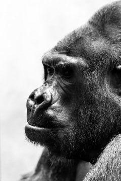 Gorilla zwartwit portret sur Dennis van de Water