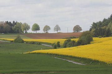 Koolzaadvelden in de Ardennen von Rob Hendriks