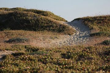 Zand pad over de duin. van Sanne Willemsen