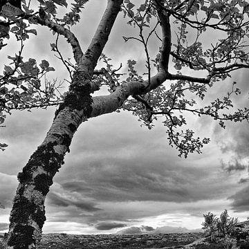 Eenzame boom van Johan Zwarthoed