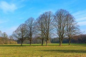 Grasveld met groep bomen