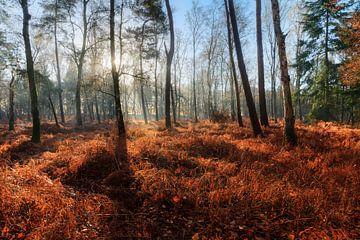 Herfstochtend in het bos met blauwe lucht van