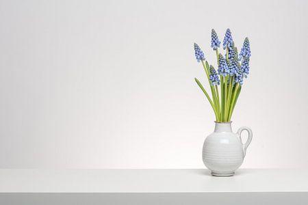 Small Grape Hyacinth in white von Roderick van de Berg