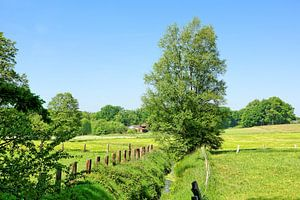 Early Summer in Lower Saxony