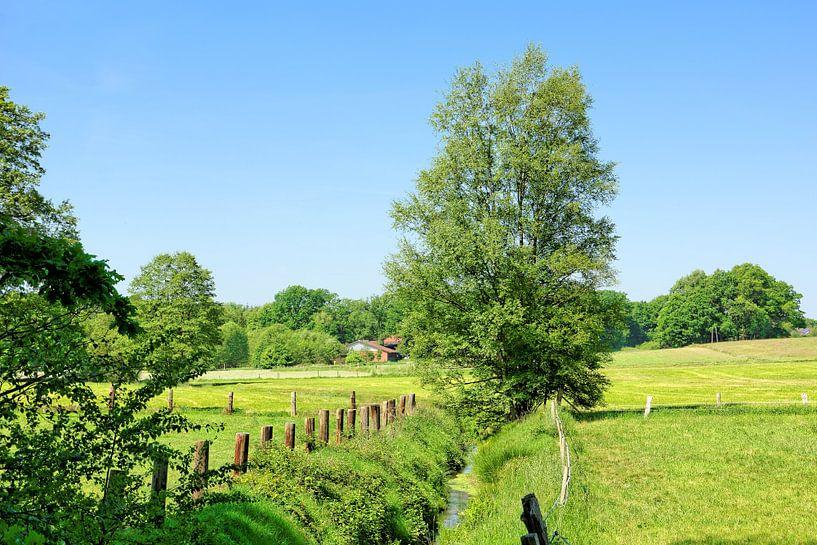 Early Summer in Lower Saxony van Gisela Scheffbuch