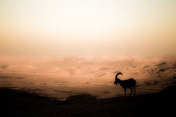 Ibex van Omri Raviv
