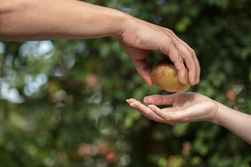 adam en eva de verboden vrucht3 van anne droogsma