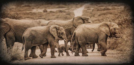 Jong olifantje in de groep