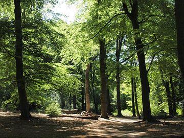 Open vlakte in bos bij Hartensepad van Annie Lausberg-Pater